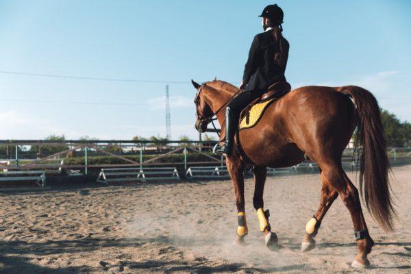 Seguro para caballos: FULLCOVER, el seguro olímpico de equitación Tokio 2021
